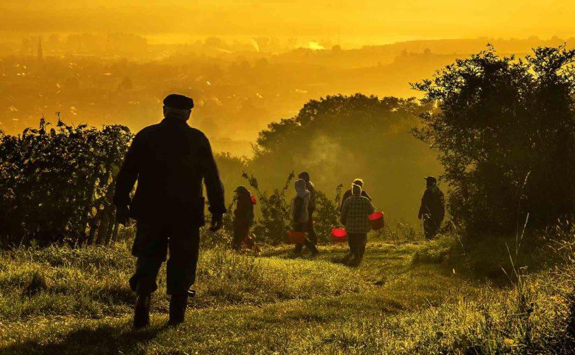 Harvest Wine Safety